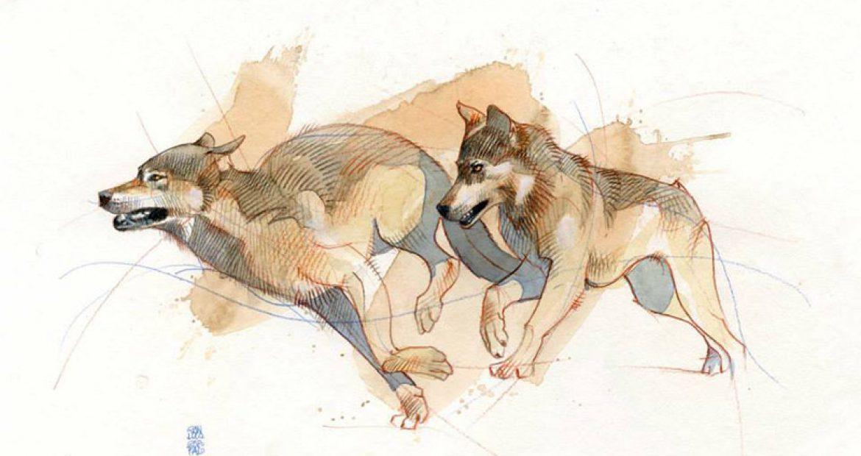 Contenuto #3: illustrare anima e passione