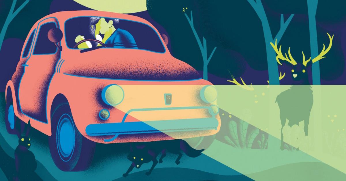 Animali notturni – call for illustrators